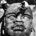 Cabeza Olmeca : El Rey 1