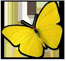 grande-amarilla