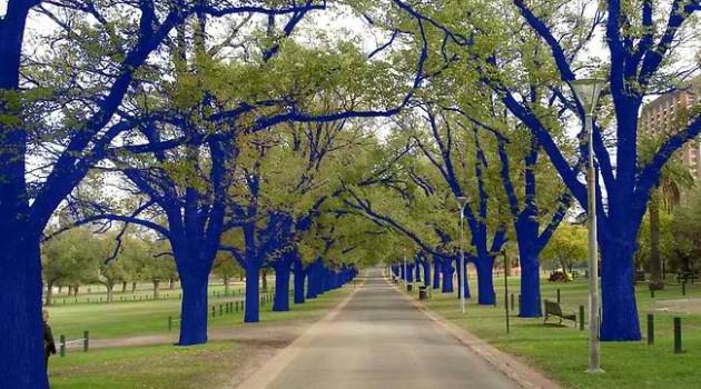 Konstantin-Dimopoulos-Blue-Tree-2-630x350