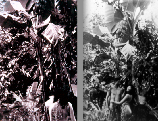 José-Alejandro-Restrepo-Musa-Paradisíaca