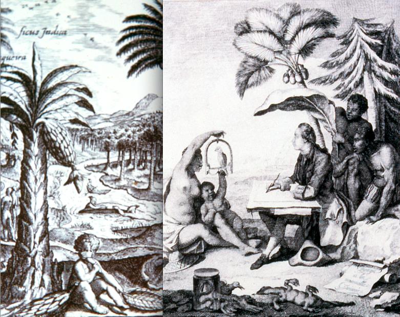 Musa-grabados