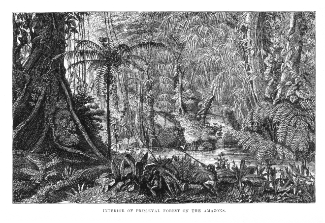 Naturalist_on_the_River_Amazons_figure_4